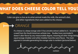 Cheese Color