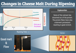 Cheese Melting Graphic